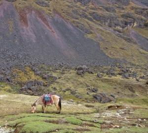 sickhorse