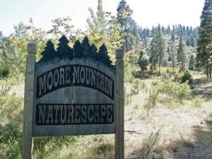 mooremtnnaturscape